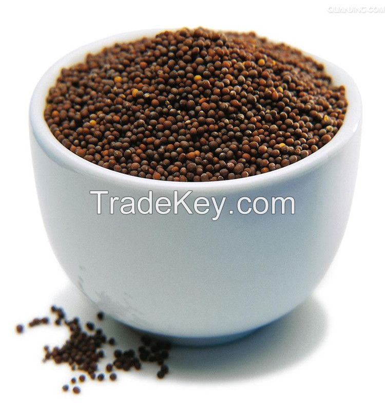 high quality and best price rapeseeds FOR OIL from Australia and Kazakhstan