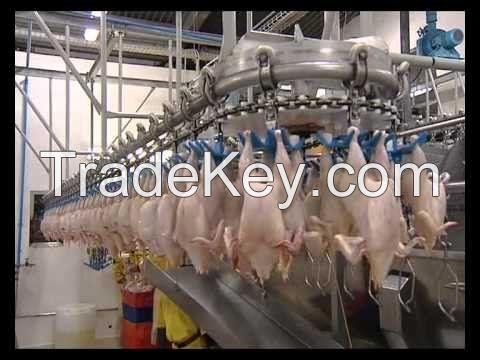 Buy Whole Chicken, Chicken Wings, Chicken Paws, Chicken Feet, Chicken Drumstick, Chicken Quarter Leg