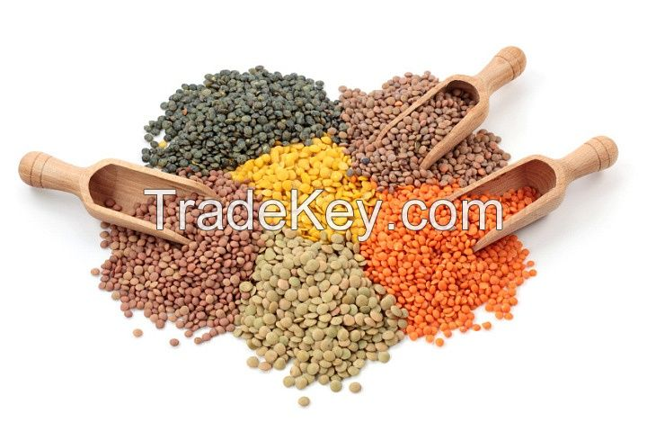 Fresh Canadian Lentils, Peas and Pulses