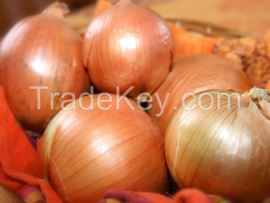onion seeds from turkey