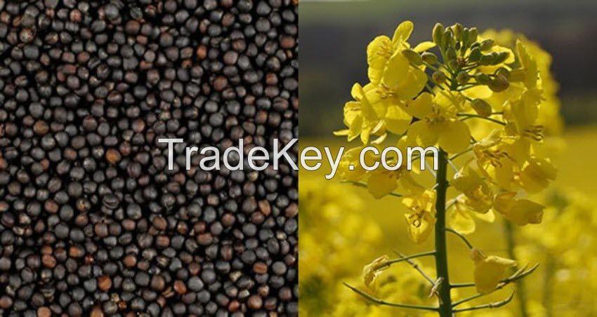 Rape seeds, Ukrainian crop, 2015