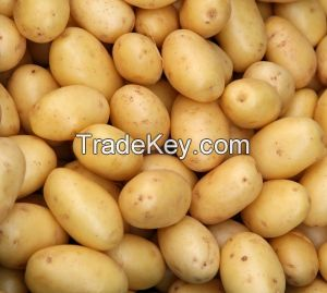 Fresh potatoes, ginger, Onions and other Fresh vegetables