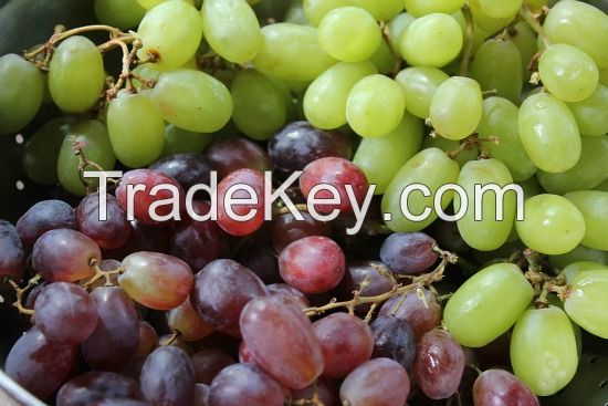 Rectangular Disposable Plastic Grape Packing box with hinged lid