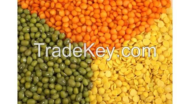 High Quality Lentils/Red Lentils/Green lentils