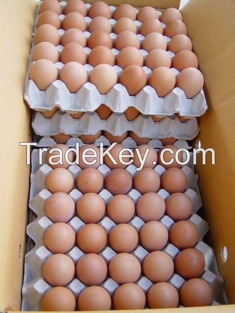 Fresh and Fertile chicken egg, ostrich egg, and other birds like parots eggs