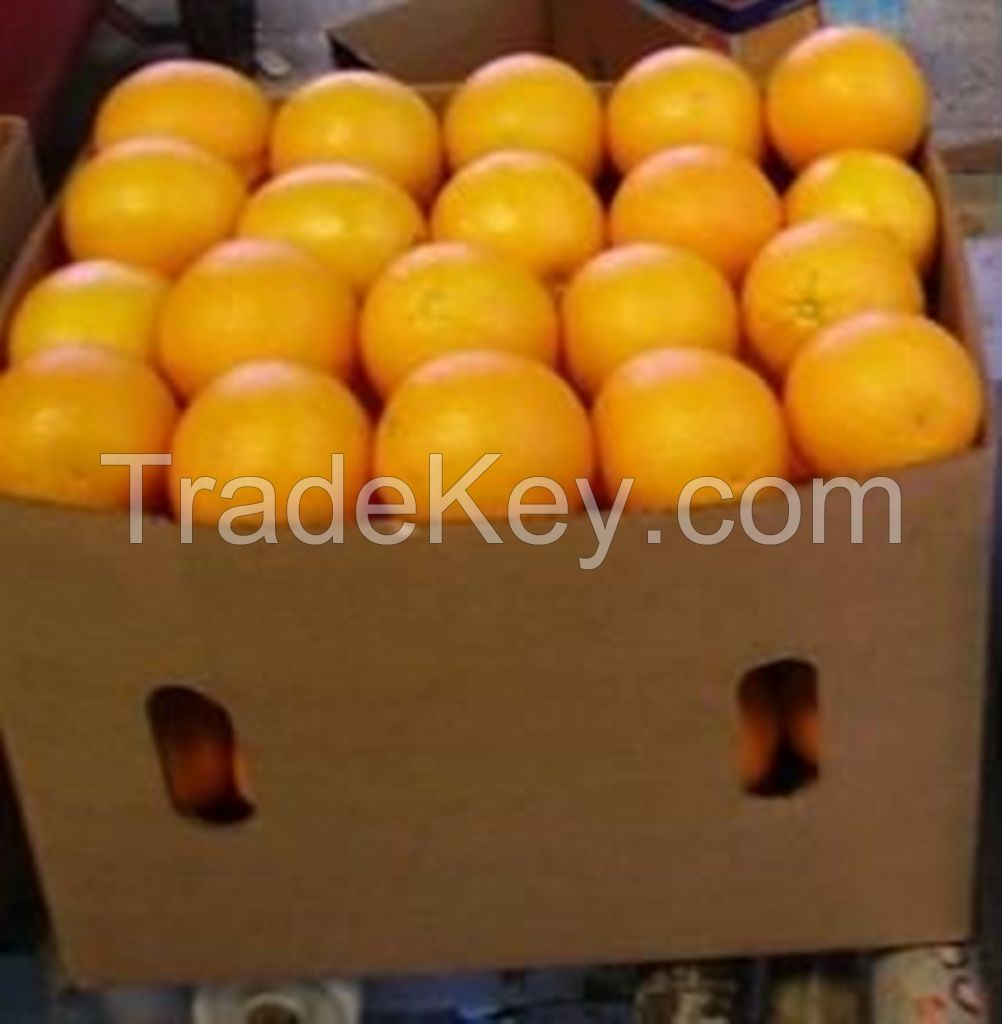 Fresh Citrus fruits apples, Oranges. Tangarine, lemons mandarines and others