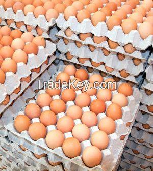 Fresh Farm Chicken White and Yellow  Eggs