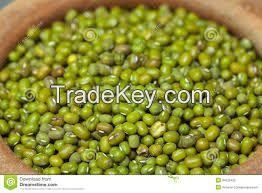 Quality Green Mung Beans