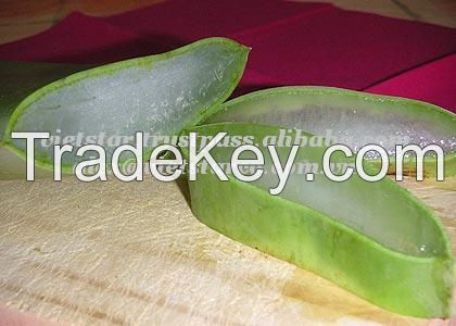 Vietnam Fresh Aloe Vera Fruit/Juice