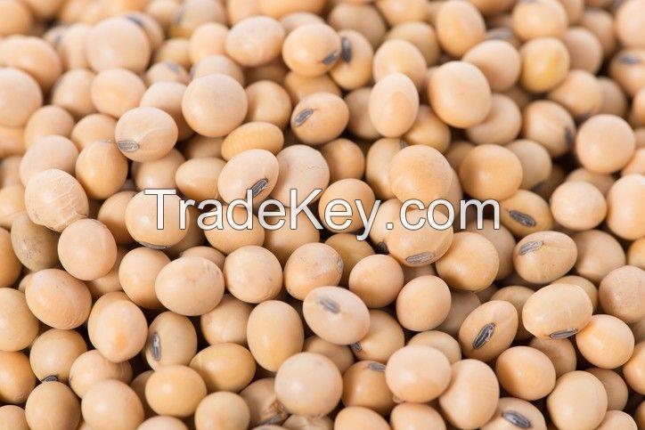 Non GMO Soya Beans