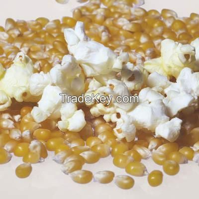 Cheap Price Popcorn Seed