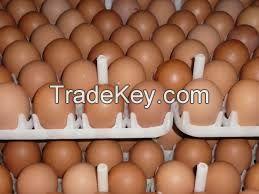 Fresh White Brown Table Eggs /Fresh Chicken Table Eggs & Fertilized Hatch