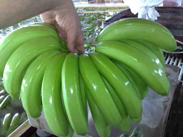 Green Cavendish Bananas, Cavendish Bananas Seeds for Sale