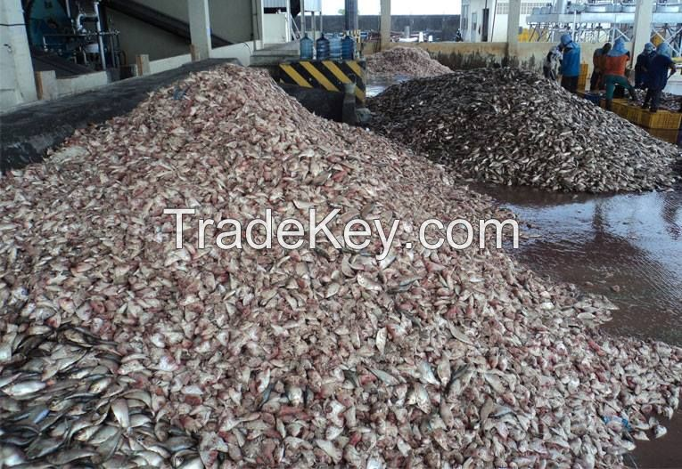 Used in feeds high quality low price 65% poultry bone fish meal