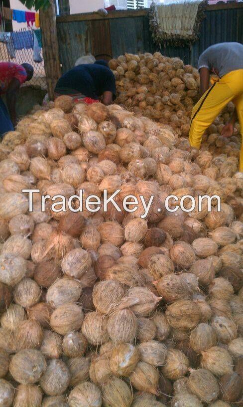 Coconuts El Platanero