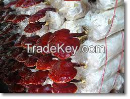 GANODERMA RED WHOLE MUSHROOM