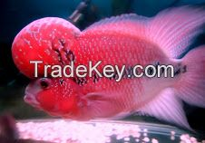 arowana fish,plcos and others available