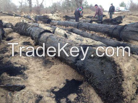 Bog Oak Unedged board