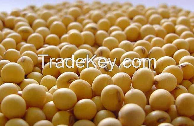 Dried Soybean / Dried Yellow Corn