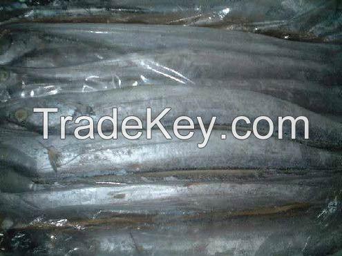 High Quality Frozen Ribbon Fish