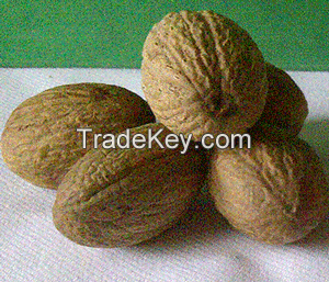 Nutmeg seed dried
