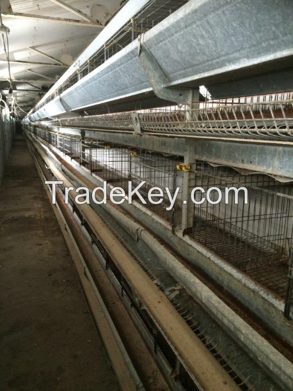 Used poultry battery cages
