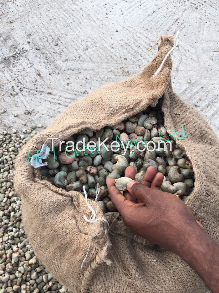 High Quality Raw Cashew Nuts (RCN)