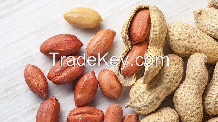 Peanut Kernel