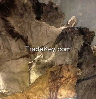 100% Wet Salted Donkey Hides & Cow Hides