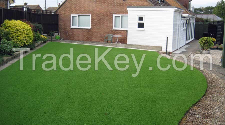 Arabica lawn grass