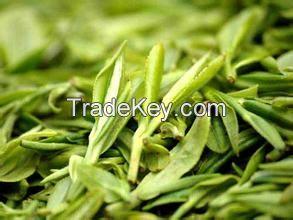 Xinyangmaojian tea