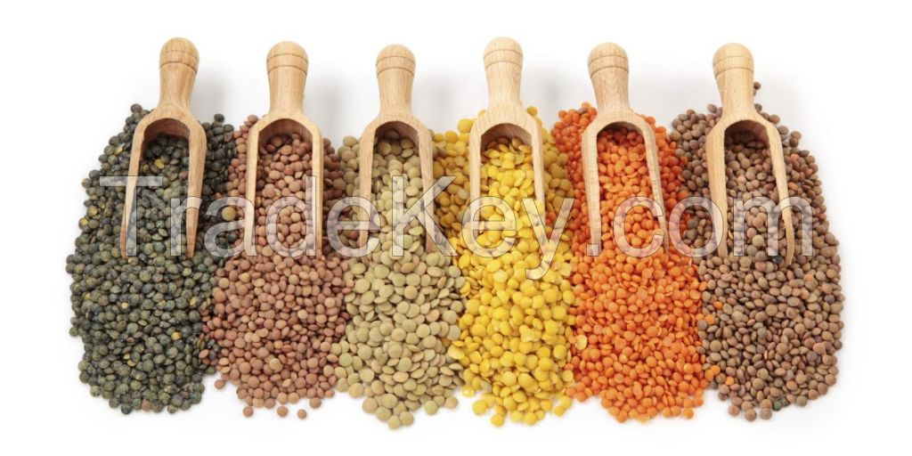 High Quality Lentils/Red Lentils/Green lentils