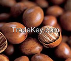 Shea Nuts, Roasted Nuts, Blended Nuts