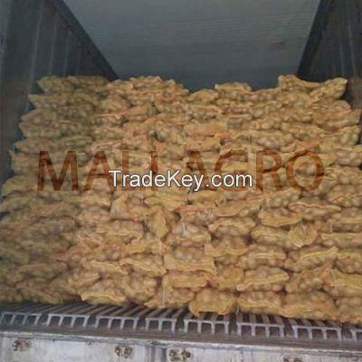 Indian Fresh Potatoes