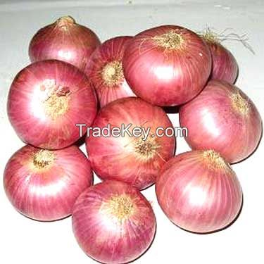 Fresh Red Onions | Spring Onions | Golden Onions