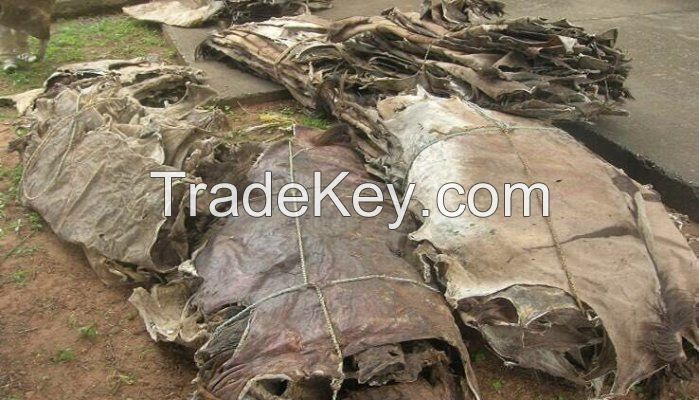 Wet Salted Donkey/Goat Skin / Cow / Salted Cow Hides / Sea House Skin Best Price