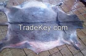 Qaultiy Dry and  Wet Salted Cow Hide, Donkey Hide , Sheep and Goat Skin, Stingray Skin, Seahorse Skin, Snake Skin Crocodile Skin