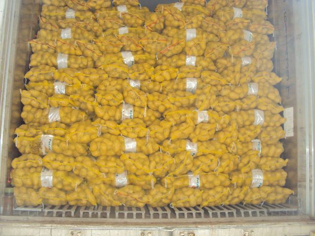 2016 new fresh holland potatoes at cheap price
