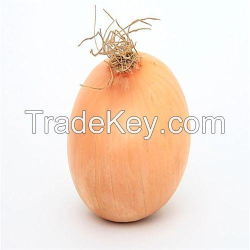 Hot Sell Fresh Onion