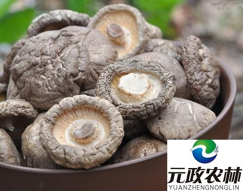 Edible Organic Dried Wild Vegetable