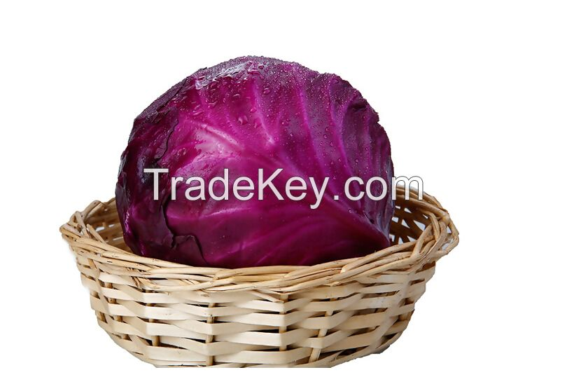Hot Sale Natural Fresh Purple Cabbage