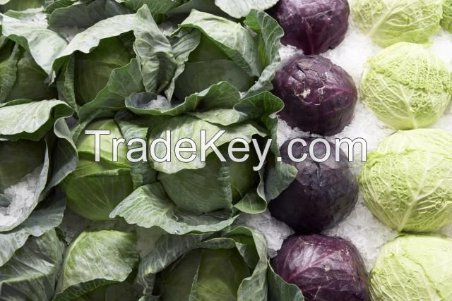 Fresh Cabbage/Cabbages