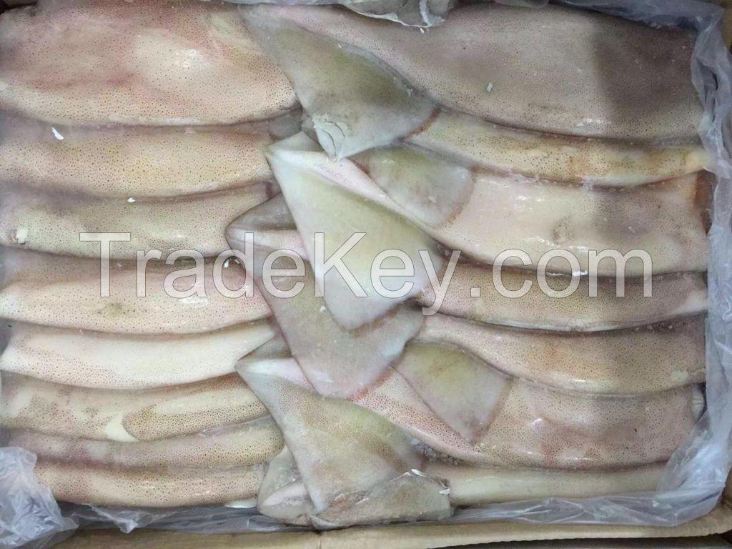 Sea Frozen   Fresh Frozen Squid Distributor