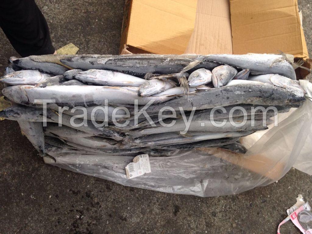 Frozen Spanish Mackerel IQF / Atlantic Mackerel Fishes