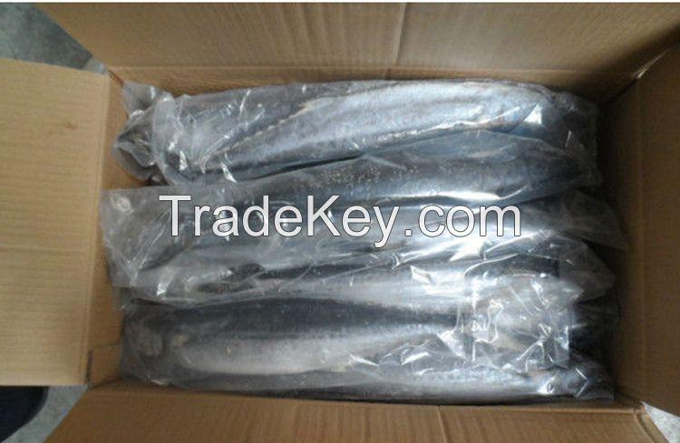 Sea Frozen Fishes - Pacific Mackerel / Pacific Jack Mackerel / Trachurus symmetricus / Californian Jack Mackerel / Jack Mackerel