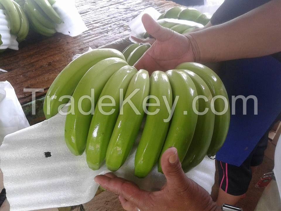 Fresh Green Cavendish Banana | Fresh fruit