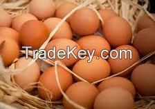 Quality Fresh Chicken Brown & White Table Eggs & Fertilized Hatching Eggs, White and Brown Eggs