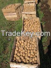 Fresh Potatoes, Sweet Potato For Sale..