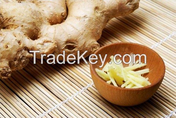 Vietnam Fresh Ginger with hot price