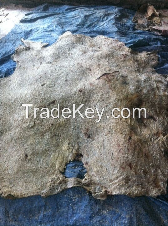Wet Salted Cowhide